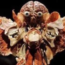 Profile photo of marshmellowhorror